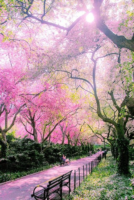 Spring time in the Conservatory Garden in Central Park, New York City. | CasaVersa ~ Never feel like a tourist again | Scoop.it