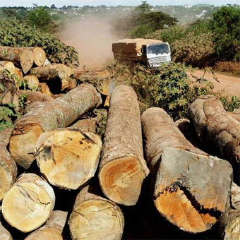 La deforestación: un fenómeno que amenaza la vida del hombre | Noticias de ecologia y medio ambiente | Fundación Reto Aguas Abiertas | Scoop.it
