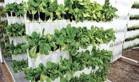 Vertical Farming Takes Off In Dubai - DesignBuild Source | Vertical Farm - Food Factory | Scoop.it