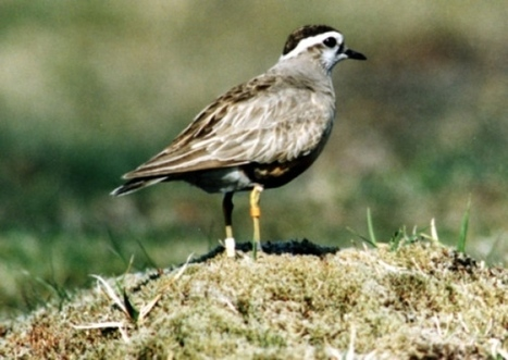 Scottish climate change could wipe out rare birds - Environment - Scotsman.com | Sustain Our Earth | Scoop.it