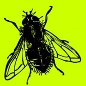 Edmodo in the Grade 5 Classroom | A Fly on the Classroom Wall | Learning environment | Scoop.it