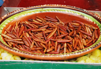 Will Insects Be the Food of the Future? Find Out at ICE 2016 | Entomophagy: Edible Insects and the Future of Food | Scoop.it