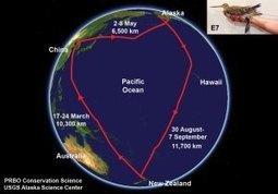 Birds Migrate Earlier Because of Climate Change | GarryRogers Biosphere News | Scoop.it