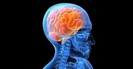 Teriam nossos cérebros nos deixado mais fracos? - Tech&Net | Antropologia Cognitiva | Scoop.it