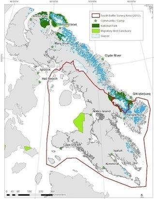 NunatsiaqOnline 2013-05-21: NEWS: South Baffin caribou population plunges: Nunavut survey | The Arctic - Nunavut | Scoop.it
