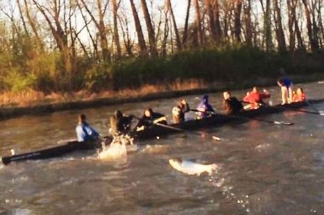 Watch bizarre moment hundreds of leaping carp 'attack' university rowing team ... - mirror.co.uk | Indoor Rowing | Scoop.it