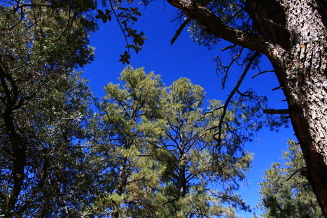 Is Sustainable Forestry Sustainable? | GarryRogers Biosphere News | Scoop.it