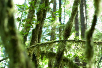 Ecopsychology and Forest in Motion - Visionary Connection: People ... | ecopsychology | Scoop.it