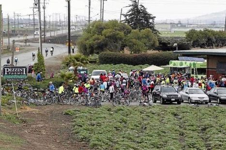 Four riders in charity event hurt in Moss Landing traffic accident | Bicycle Accidents | Scoop.it