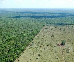 Brazil energy, farm incentives fuel CO2 emissions   Sustain Our Earth   Scoop.it