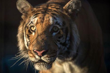 EN IMAGES. La deuxième vie des animaux du zoo de Gaza | Biodiversité | Scoop.it