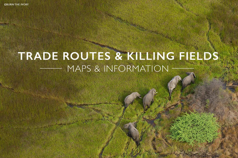 Trade routes and killing fields - Africa Geographic Magazine | Wildlife Trafficking: Who Does it? Allows it? | Scoop.it