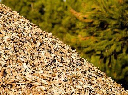 La Sicilia punta sulle biomasse | EnergiaAmbiente2.0 | Scoop.it