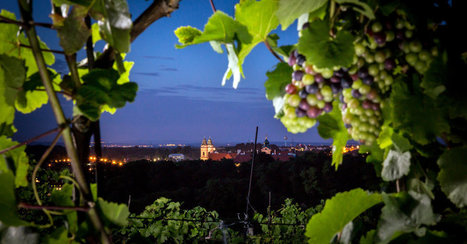 A Growing Reputation for #Wine Nestled in the Czech Republic | Vitabella Wine Daily Gossip | Scoop.it