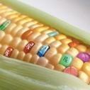 Monsanto, le pouvoir par la science ? | Shabba's news | Scoop.it