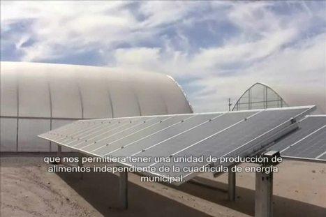 Producción sustentable en invernaderos | Hortalizas | CALS in the News | Scoop.it