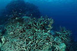 Threats to the Great Barrier Reef | Ecosystems | Scoop.it