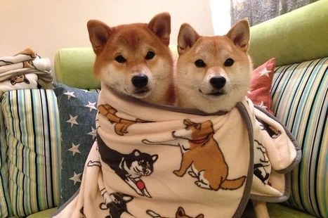 16 Photos Of The Most Adorable Dog Family | ♨ Family & Food ♨ | Scoop.it