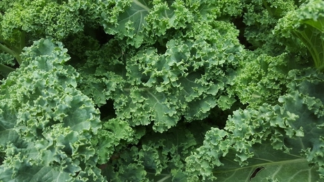 Why No One Should Overlook Kale   Vertical Farm - Food Factory   Scoop.it
