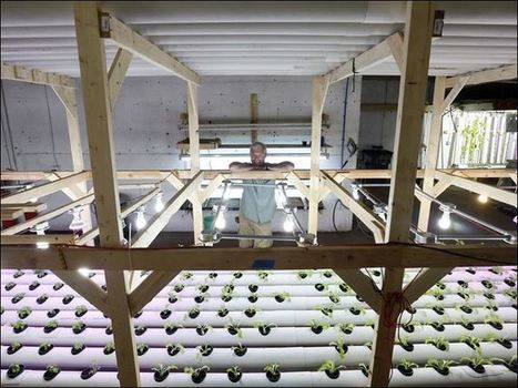 USA - Small-scale commercial aquaponics - Vegetable, fish farming under one roof | Aquaponics in Action | Scoop.it