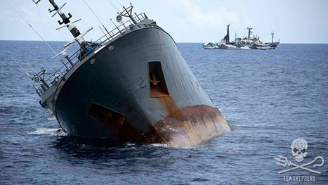 Captain deliberately sank illegal fishing vessel, claim Sea Shepherd rescuers | SA Scuba Shack | Scoop.it