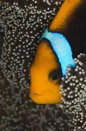 Animales: Las 10 especies más amenazadas por el calentamiento global | Calentamiento Global | Scoop.it