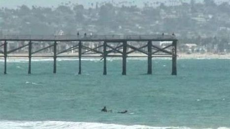San Diego surfer found dead covered with shark bites - Fox News | CLOVER ENTERPRISES ''THE ENTERTAINMENT OF CHOICE'' | Scoop.it