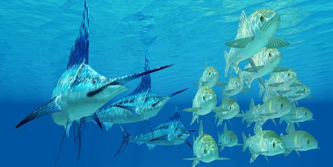 Islamorada Charter Fishing Trips for Competitive Deep Sea Fishers   Islamorada Fishing Source   Scoop.it