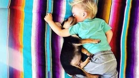 Schattig: kleuter doet elke dag een dutje met puppy | Actua Daphne | Scoop.it