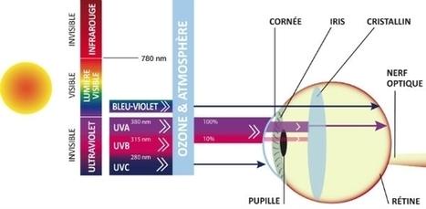 Tout savoir sur la protection de vos yeux face au soleil | Ophtalmologie | Scoop.it