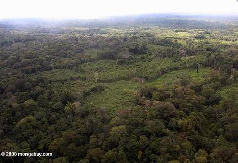 Next big idea in forest conservation? Recognize the value of novel forests | Forests | Scoop.it
