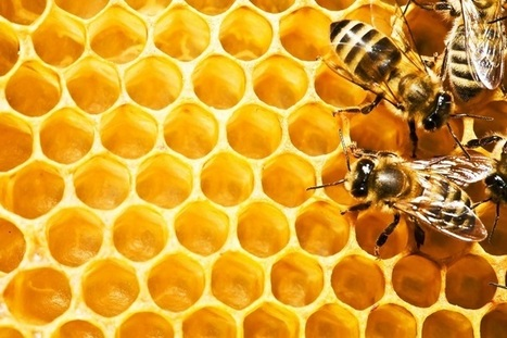 Did you know that Propolis is a natural antibiotic? | e-good health | Health from the Hive | Scoop.it