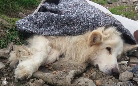 Abandoned dog found wrapped in carpet and dumped on rubbish heap | Want not, Waste not | Scoop.it