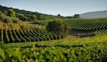 Super Tuscan Monteverro plans rapid expansion   Vitabella Wine Daily Gossip   Scoop.it