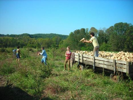 Small Farms In America To Be The Next Big Thing | TLB | tlb | Scoop.it