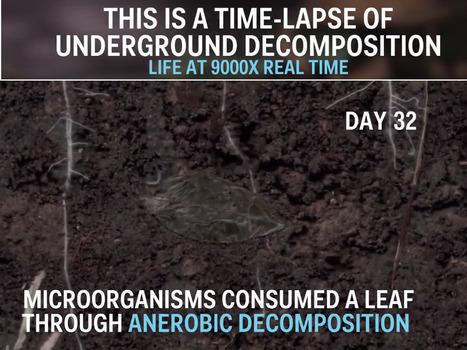 La décomposition aérobie des matières dans le sol enaccéléré photographique, un petit film par Josh Williams   Confidences Canopéennes   Scoop.it