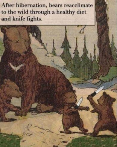 Bears. | Humour | Scoop.it