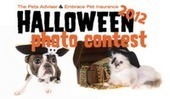 Bunny's Blog: Enter Halloween Pet Photo Contest, Win $1,000 for Favorite Animal Shelter | Pet News | Scoop.it