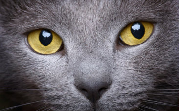 See How the World Looks Through Your Cat's Eyes | Animal Rights | Scoop.it