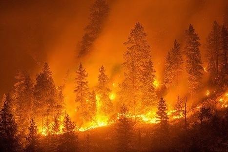 Penyebab Kebakaran Hutan Serta Dampaknya Bagi Kehidupan   Pemanasan Global   Scoop.it