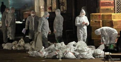 El virus de la gripe de Shanghái se transmite con eficacia por el aire - El País.com (España) | publicaciones veterinarias | Scoop.it
