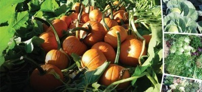 GM food inevitable to overcome hunger - PakistanToday.com.pk | food | Scoop.it