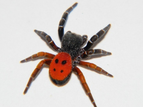 Les 12 plus belles espèces découvertes en 2015 | Biomimétisme - Biomimicry | Scoop.it