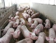 Une restructuration du secteur de l'abattage est à prévoir | agroalim_distrib | Scoop.it