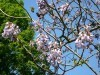 Invasive tree threatens park | Plant Pests - Global Travellers | Scoop.it