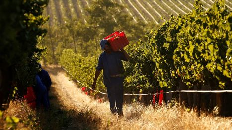 "Denmark's supermarkets are refusing to stock South African wines made by ""slavery in the vineyards"" 