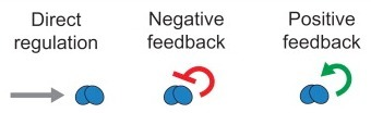 Understanding and Exploiting Feedback in Synthetic Biology | SynBioFromLeukipposInstitute | Scoop.it