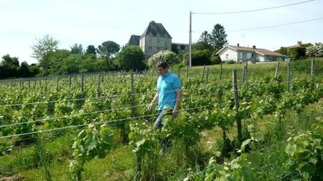 Saussignac, une petite appellation de liquoreux qui mérite le détour... | Agriculture en Dordogne | Scoop.it