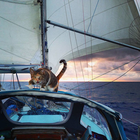 Woman Quits Her Job And Sails Around The World With Her Rescue Cat | Vloasis humor | Scoop.it