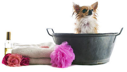 Dog Grooming Kit:A Fantastic Gift Giving Option | All About Pet Accesories | Scoop.it